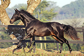 HOR 01 SS0253 01