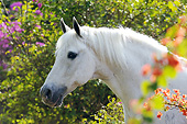 HOR 01 SS0257 01