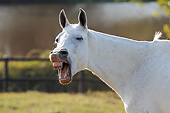 HOR 01 SS0258 01