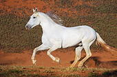 HOR 01 SS0259 01