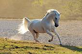 HOR 01 SS0260 01