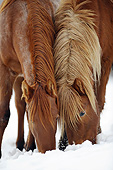 HOR 01 SS0267 01