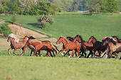 HOR 01 SS0271 01