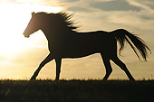 HOR 01 SS0275 01