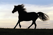 HOR 01 SS0276 01