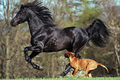 HOR 01 SS0277 01