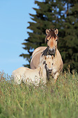 HOR 01 SS0279 01