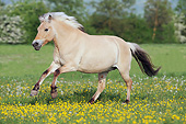 HOR 01 SS0282 01