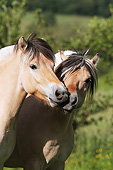 HOR 01 SS0283 01