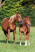 HOR 01 SS0299 01