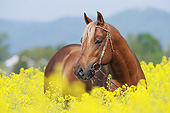 HOR 01 SS0304 01