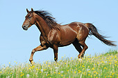 HOR 01 SS0307 01