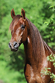 HOR 01 SS0308 01