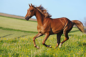 HOR 01 SS0309 01
