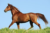 HOR 01 SS0311 01