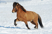 HOR 01 SS0323 01