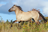 HOR 01 SS0324 01