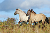 HOR 01 SS0325 01