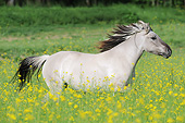 HOR 01 SS0326 01