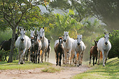 HOR 01 SS0327 01