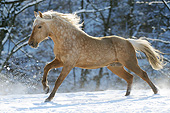 HOR 01 SS0332 01