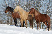 HOR 01 SS0334 01