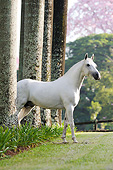 HOR 01 SS0336 01
