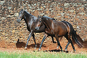 HOR 01 SS0337 01