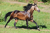 HOR 01 SS0339 01