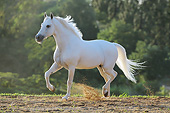 HOR 01 SS0340 01