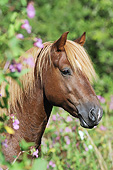 HOR 01 SS0344 01