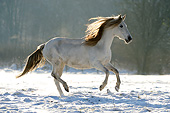 HOR 01 SS0346 01