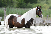 HOR 01 SS0349 01