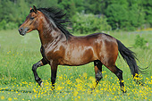 HOR 01 SS0351 01