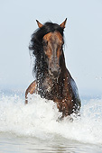 HOR 01 SS0353 01