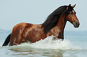 HOR 01 SS0354 01