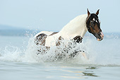 HOR 01 SS0355 01