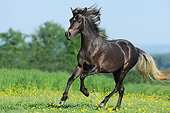 HOR 01 SS0357 01