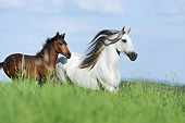 HOR 01 SS0360 01