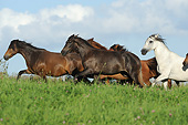 HOR 01 SS0362 01