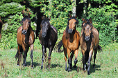 HOR 01 SS0367 01