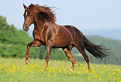 HOR 01 SS0370 01