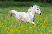 HOR 01 SS0371 01