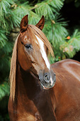 HOR 01 SS0372 01