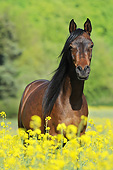 HOR 01 SS0374 01