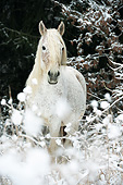HOR 01 SS0375 01