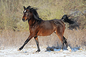 HOR 01 SS0376 01