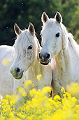 HOR 01 SS0377 01
