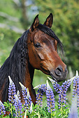 HOR 01 SS0378 01