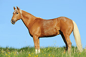HOR 01 SS0382 01